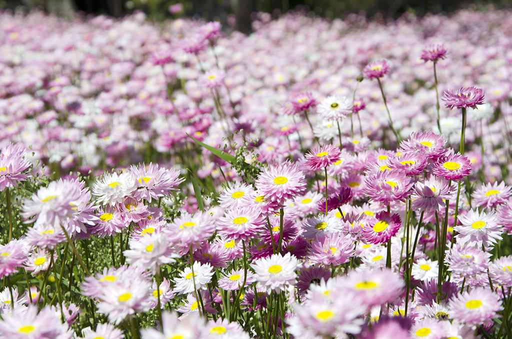 perth-spring
